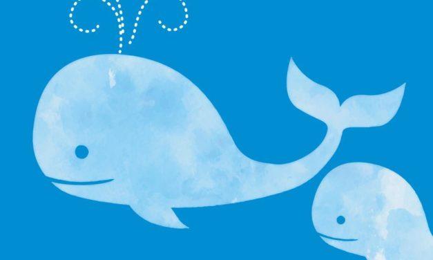 alla scoperta del magico mondo delle balene  | spazio lab
